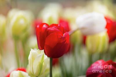 Photograph - Springtime by Eva Lechner
