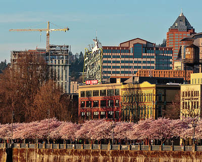 Photograph - Springtime In Portland Oregon by Wes and Dotty Weber
