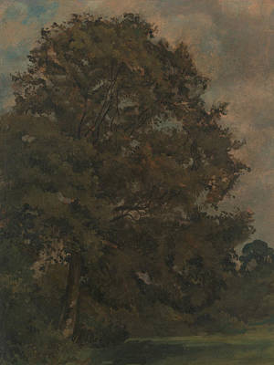 Painting - Study Of An Ash Tree by Lionel Constable