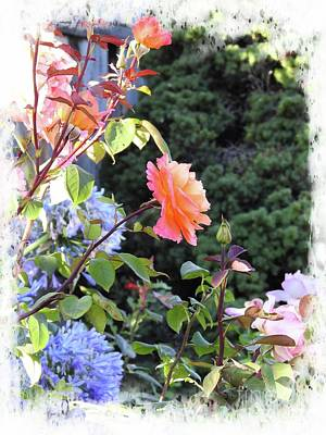 Photograph - Summer Garden by Leslie Hunziker
