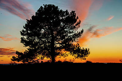 Photograph - Sunset Silhouette by Cathy Kovarik