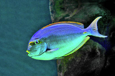 Surgeon Fish. Underwater World. Original