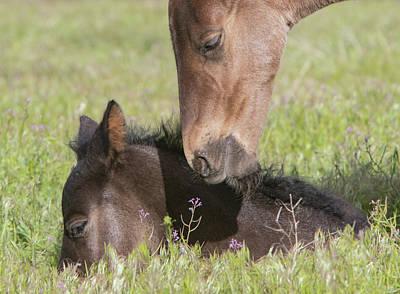 Photograph - Sweet Foals by Kent Keller