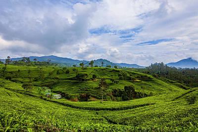 Nature Seekers Wall Art - Photograph - Tea Plantation by Irman Andriana