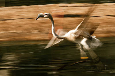 Photograph - The Bird by Christine Sponchia