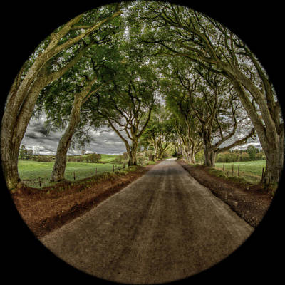 Photograph - The Dark Hedges by Chris Cousins