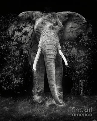Erik Brede Rights Managed Images - The Disappearance of the Elephant Royalty-Free Image by Erik Brede