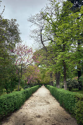 Photograph - The Paths Of The Retiro Park by Eduardo Jose Accorinti
