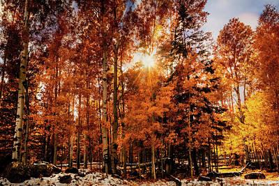 Photograph - The Splendor Of Autumn by Saija Lehtonen