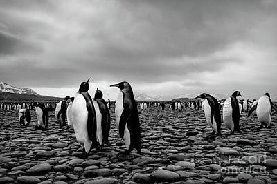 Photograph - Threesome by Patti Schulze