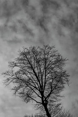 Photograph - Tree Sky And Clouds by Robert Ullmann