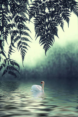 Photograph - Tropical Splendor by Jessica Jenney