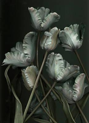 Plant Photograph - Tulips by Antonius Antonius
