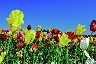 Mistletoe - Tulips by Susan Sligh