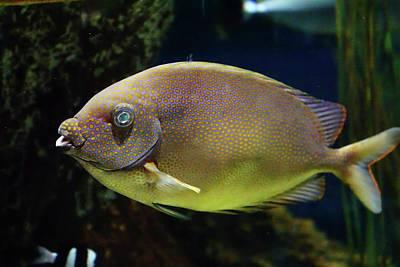 Traditional Bells - Underwater view of bright colored fish by Steve Estvanik