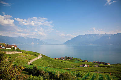 House Photograph - Vineyards Around Lake Leman by Onfokus