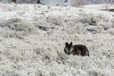 Photograph - W18 by Joshua Able's Wildlife