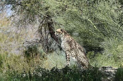 Photograph - Watchful by Fraida Gutovich