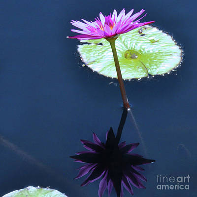 Photograph - Water Lily Reflection by Elaine Manley