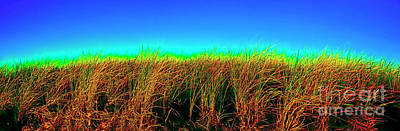 Photograph - Wells Rachel Carson Wildlife Refuge Grass And Dunes by Tom Jelen