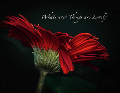 Photograph - Whatsoever Things Are Lovely by Joni Eskridge