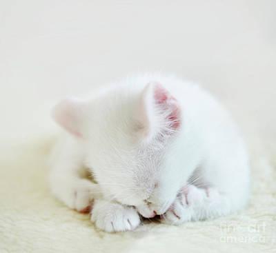Photograph - White Cat by Jelena Jovanovic