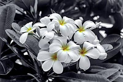 Photograph - White Petunias by Carlos Diaz