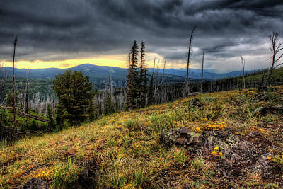Photograph - Wild flowers in Yellowstone  by Don Johnston
