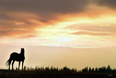 Photograph - Wild Horse Sunset by Leland D Howard