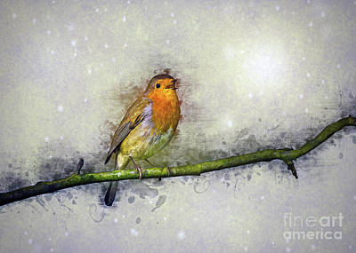 Drawing - Winter Robin by Ian Mitchell