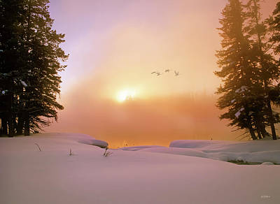 Photograph - Winter Swans by Leland D Howard