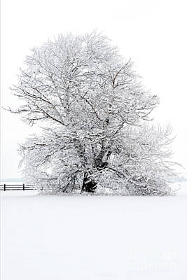 Photograph - Winter White by Mike Dawson