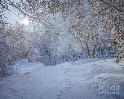 Photograph - Winter Wonderland by Susan Rydberg