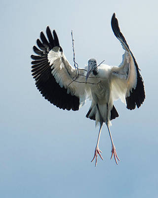 Photograph - Woodstork Nesting by Donald Brown