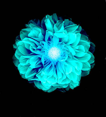 Flower Photograph - X-ray Like Image Of A Flower by Chris Parsons