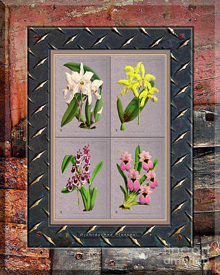 Food And Flowers Still Life - Orchids Antique Quadro Weathered Plank Rusty Metal by Baptiste Posters