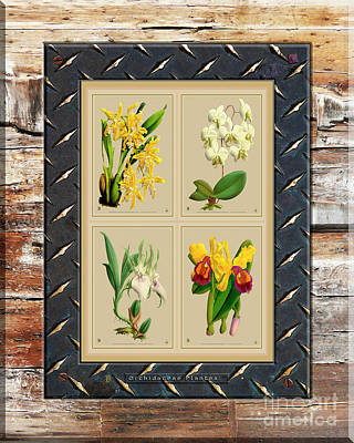 Red Roses - Orchids Antique Quatro on Rusted Metal and Weathered Wood Plank by Baptiste Posters