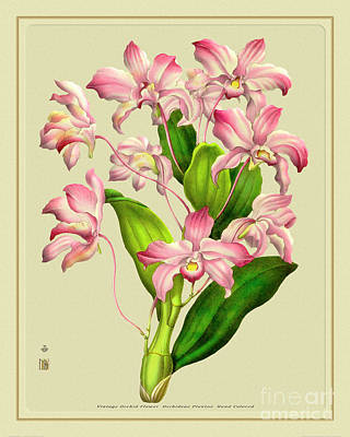 Mixed Media Royalty Free Images - Orchid Flower Orchideae Plantae Flora Royalty-Free Image by Baptiste Posters