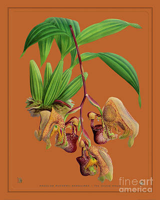 Pineapple - Orchid Vintage Print on Colored Paperboard by Baptiste Posters