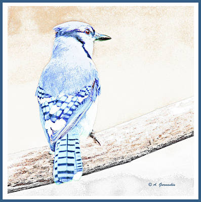 Photograph - Blue Jay, Animal Portrait by A Gurmankin