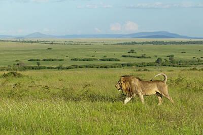 Photograph - Kenya, Masai Mara National Reserve by Denis-huot / Hemis.fr