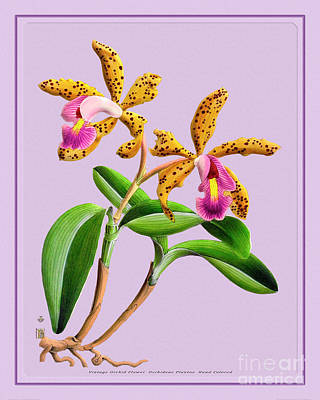 Abstract Oil Paintings Color Pattern And Texture - Orchid Flower Orchideae Plantae Antique by Baptiste Posters