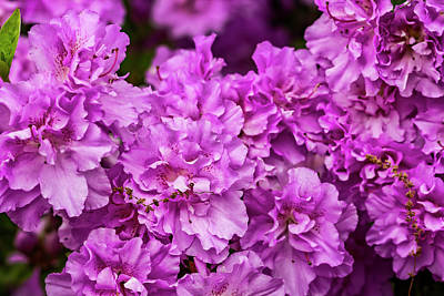 Royalty-Free and Rights-Managed Images - Spring Flowers by Robert Ullmann