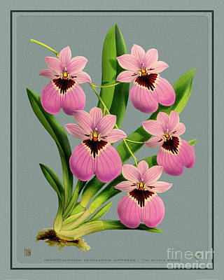 Amy Weiss - Orchid Vintage Print on Tinted Paperboard by Baptiste Posters