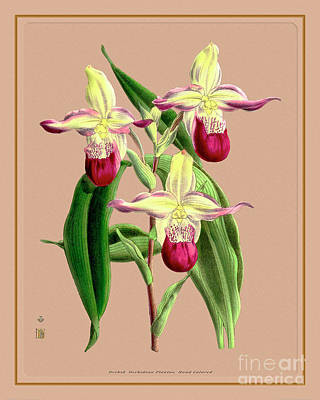 Outdoor Graphic Tees - Orchid Flower Orchideae Plantae Vintage by Baptiste Posters
