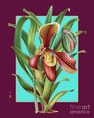 Pasta Al Dente - Vintage Orchid Exotic Flower Plant by Baptiste Posters