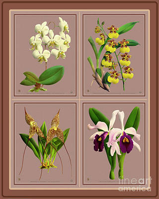 Typographic World - Orchids Quatro Collage by Baptiste Posters
