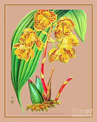 Hollywood Style - Orchid Flower Orchideae Plantae Flora by Baptiste Posters
