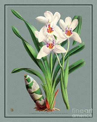 Nautical Animals - Orchid Vintage Print on Colored Paperboard by Baptiste Posters