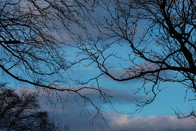 Photograph - Sky Trees And Clouds by Robert Ullmann